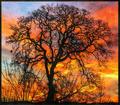 Photograph - Fire In The Sky by Angie Vogel