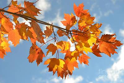 Photograph - Fire In The Sky - Autumn Leaves One by Miriam Danar