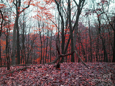Fire In The Woodland Art Print