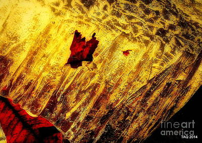 Photograph - Fire Of The Frost by Tami Quigley