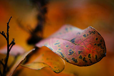 Leaf Photograph - Fire by Sarah Coppola