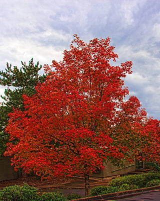 Photograph - Fire Tree Img_1443 by Torrey E Smith