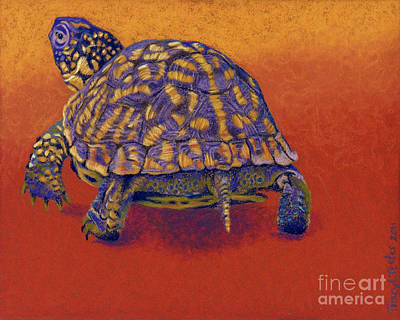 New Mexico Drawing - Fire Walker - Box Turtle by Tracy L Teeter