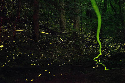 Photograph - Fireflies Flash And Streak by David Liittschwager
