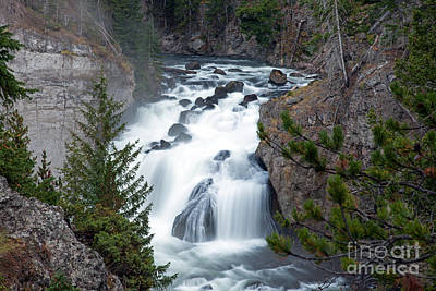 Animal Portraits - Firehole River Falls on Firehole River by Fred Stearns