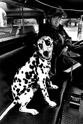 Best Friend Photograph - Fireman Dalmatian To The Rescue by Retro Images Archive