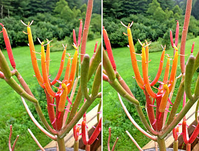 Photograph - Firesticks In Stereo by Duane McCullough