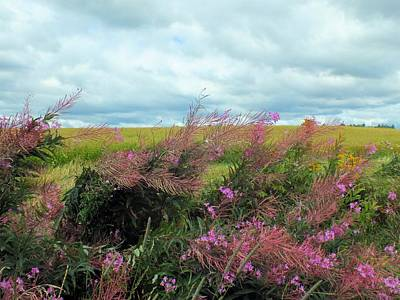 Photograph - Fireweed by Gene Cyr
