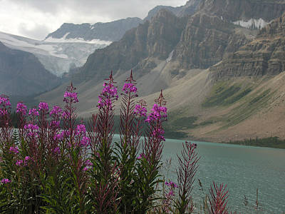 Photograph - Fireweed Ice Fields Parkway by Robert Lozen