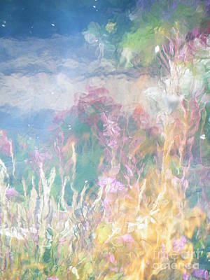 Photograph - Fireweed Number 9  by Brian Boyle
