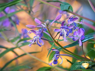 Fireweed Number Three Art Print by Brian Boyle