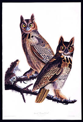 Ohio Painting - First American West  The Ohio River Valley 1750 1820  Great Horned Owl by MotionAge Designs
