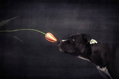 Funny Dog Wall Art - Photograph - First Approach - Hildegard And The Tulip by Heike Willers
