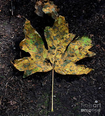 Photograph - First Autumn Leaf by Amanda Holmes Tzafrir