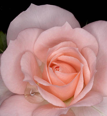 Photograph - First Bloom by Vickie Szumigala
