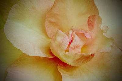 Photograph - First Blush by Julie Andel