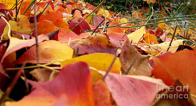 Photograph - First Day Of Fall by Andrea Anderegg