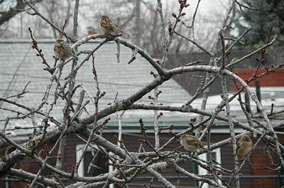 Outside My Window Photograph - First Day Of Snow by Claudi Biscotti