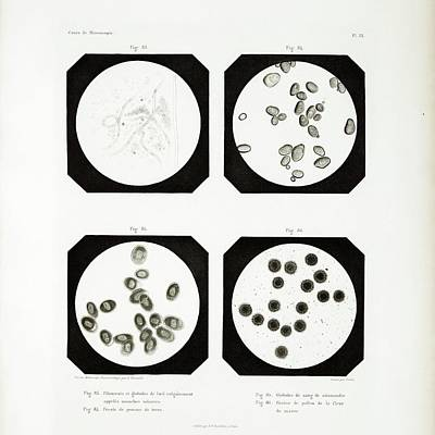 1845 Photograph - First Ever Photomicrographs by British Library