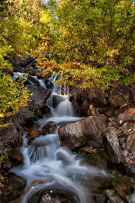 Fall Leaves Photograph - First Falls by Cat Connor