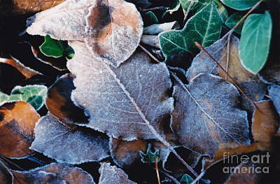 Photograph - First Frost by Barbara Plattenburg