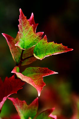 Of Autumn Photograph - First Kiss Of Autumn by Mah FineArt