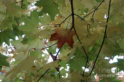 Photograph - First Leaf Of Autumn by John  Mitchell