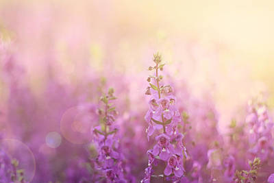 Magenta Photograph - First Light by Amy Tyler