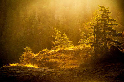 Photograph - First Rays by Kasandra Sproson