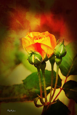 Photograph - Floral - Blossom - Buds - First Rose by Barry Jones