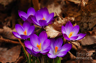 First Signs Of Spring Art Print by Elaine Manley