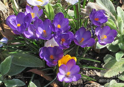 Photograph - First Signs Of Spring by Kathie Chicoine