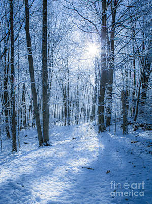Connecticut Winter Photograph - First Snow by Diane Diederich