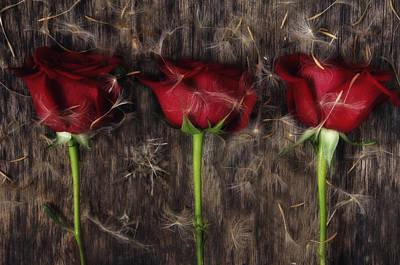 Dandelion Digital Art - Red Roses    by   larisa Fedotova