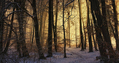 Winter Landscapes Photograph - First Snow by Norbert Maier