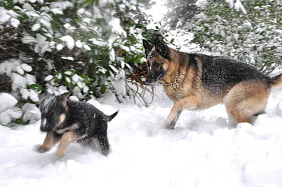 Dog Photograph - First Snow by Tanya  Searcy