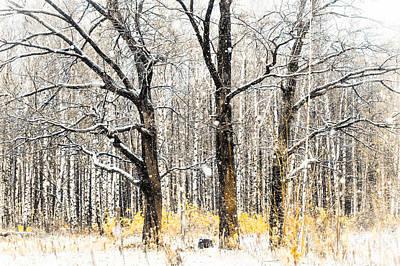 First Snow. Tree Brothers Art Print by Jenny Rainbow