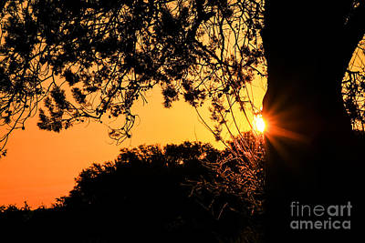 First Sunrise Of A New Year Art Print by Toma Caul