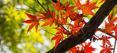Photograph - First View Of Fall by Rima Biswas