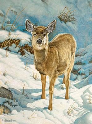 First Winter  - Fawn Art Print by Paul Krapf