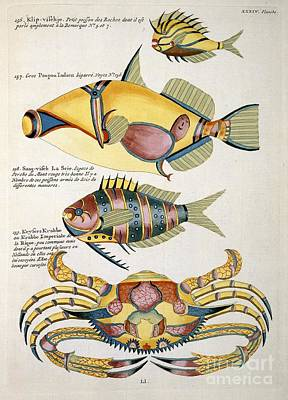 Fish Artworks From Renard, 18th Century Print by Natural History Museum, London