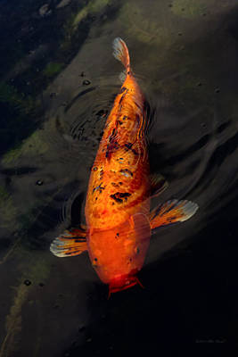 Photograph - Fish - Big Fish Little Pond  by Mike Savad