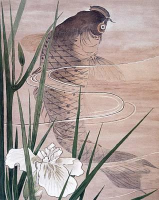 Aquatic Drawing - Fish by C. F. Kell