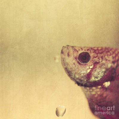 Photograph - Fish Can Be Sad Too by Aimelle