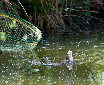Angling Photograph - Fish Caught On A Line In Water by Simon Bratt Photography LRPS