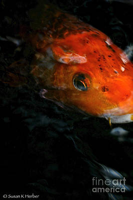 Photograph - Fish Eye On You by Susan Herber