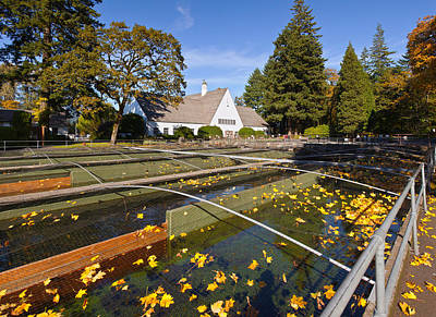 Fallen Leaf Photograph - Fish Hatchery Nets And Holding Tanks by Panoramic Images