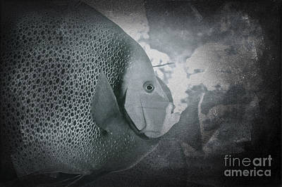 Photograph - Fish In Blue by Paul Cammarata