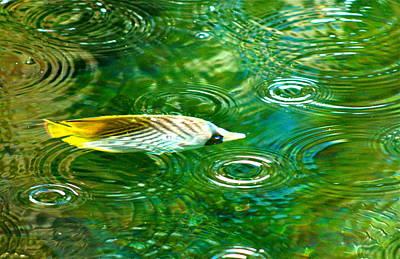 Fish In The Rain Art Print by Lehua Pekelo-Stearns