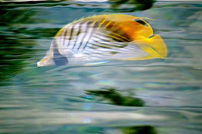 Fish In The Sunlight Art Print by Lehua Pekelo-Stearns